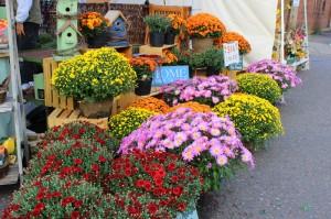 fall-festival-flowers